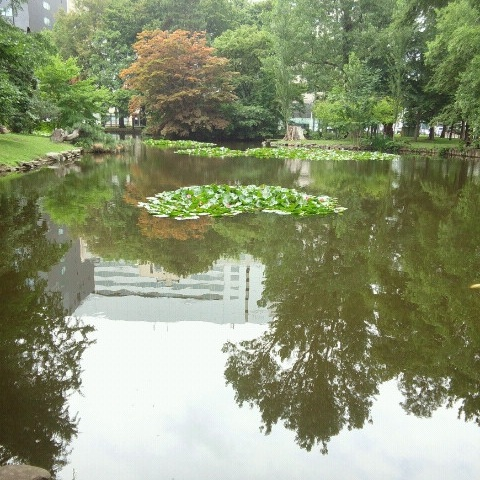 北海道庁 池.jpg